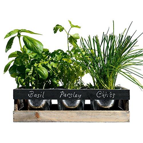 Viridescent Kräutergarten Kit Holz ideal für Fensterbank Das Perfekte Geschenk Hochwertig Kaufen sie es heute im Schlussverkauf