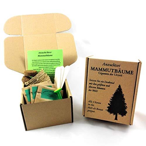 ANISTA-Mammutbaum Anzuchtset Alle drei Arten in der Geschenkbox Bonsai geeignet