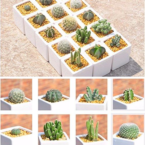 ESHOO 500 Stück Kaktus Samen Mix Zierpflanzen Samen Hofgarten mit Blumensamen