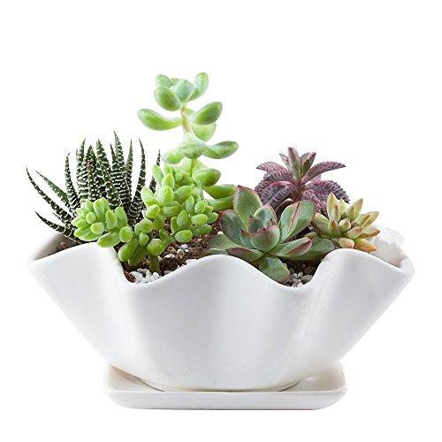 Mkouo Keramik Sukkulenten Töpfe Kaktus Pflanze Töpfe Mini Blumentöpfe mit Untersetzer Weiß