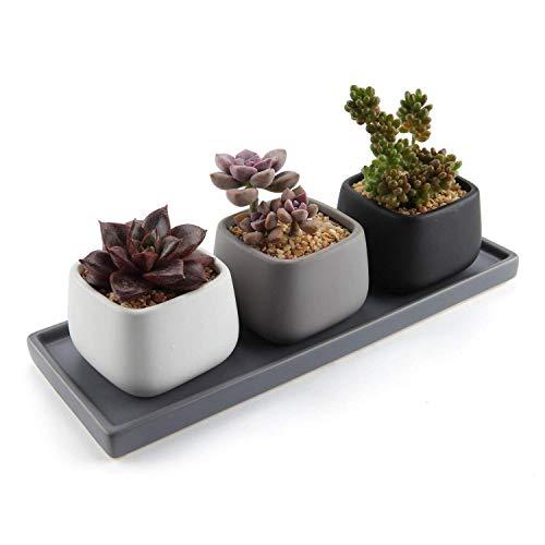T4U 7CM Keramik Modern Mini Quadrat Design Sukkulenten Töpfe Kaktus Pflanze Töpfe Mini Blumentöpfe - 3 Farben Set mit Rechteckig Untersetzer aus Keramik