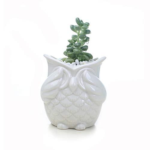 Rocita Owl Pot Premium-Flowing Glaze Basis-Desktop-Keramik-Kaktus-Blumentopf-Set Sukkulente Owl Container Balkon Planter Bonsai-Halter White Keine Uhr