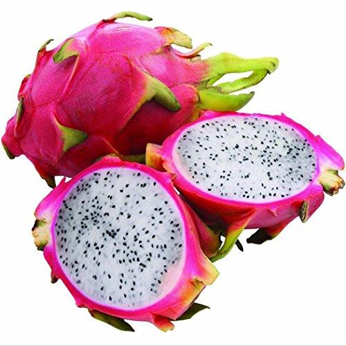 Wekold 20 Samen Pitaya Samen Drachenfrucht Samen Bonsai Pitaya Samen Drachenfrucht-Samen Bonsai Topf Pitaya Samen Kaktus Samen