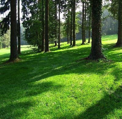 Schattenrasen 10kg ebay