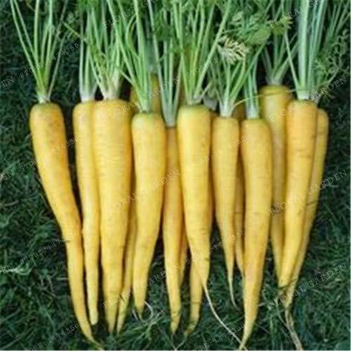 Pinkdose Gemüse 9 Farben Karotte Anti-Aging-Ginseng Pflegende Bonsaipflanzen Bonsa Für Privatanwender amp Garten 300PCS Anlage für Hausgarten 6