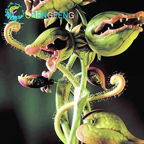 Pinkdose50 Teilepaket Topf Insektenfressende Pflanze Bonsai Dionaia Muscipula Riesen Clip Venusfliegenfalle Bonsai Für Hausgarten Weiß