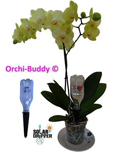 Automatische Bewässerung für Orchidee orchi-buddy