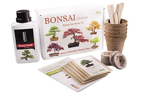 Bonsai-Baum-Set - Wachsen Sie Ihre eigenen Bonsai-Bäume - Garten-Geschenk-Set Bonsaidünger inklusive Saatenkeimungs-Starter-Set mit 5 Samenarten für Anfänger geeignet einzigartige Geschenkidee