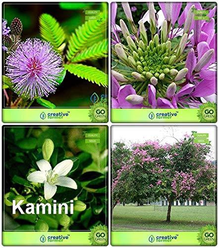 BloomGreen Co Best-Preis-Combo-Baum-Samen Orange Jasmin Lagerstroemia speciosa Arctotis Grandis Cleome Spinosa Mix Blumensamen Terrasse Garten