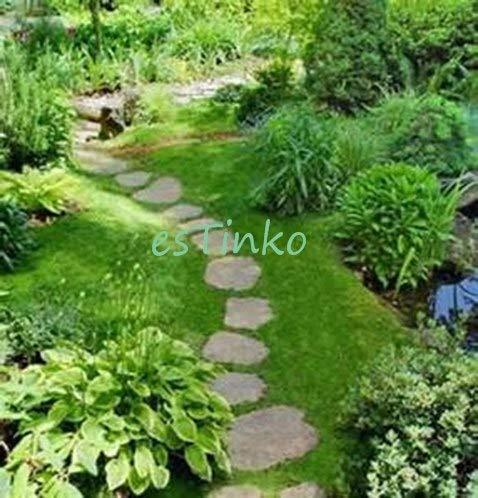 Pinkdose Importierte 50pcs  bag Irish Moss Sagina Subulata Garten Kreative Garnieren Pflanze DIY Freies Verschiffen Lila