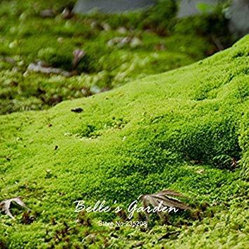 Virtue 20pcs Sagina Subulata Seeds Irish Moss Seeds Garden Ground Cover Creative Plant DIY