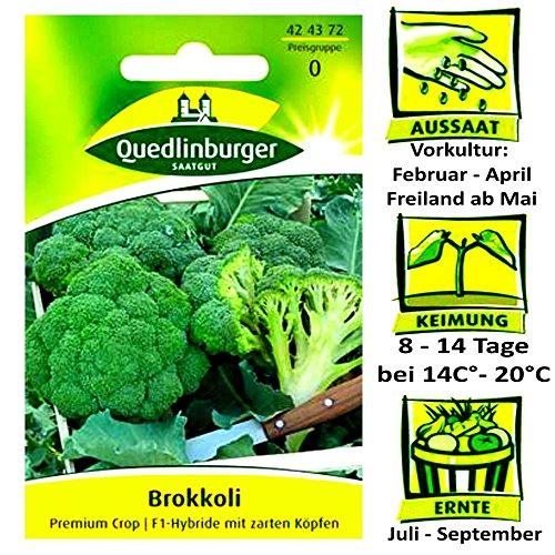 Quedlinburger Brokkoli Premium Crop - F1 Hybride - Brassica oleracea  mit zarten Kpfen  Ernte Juli bis September