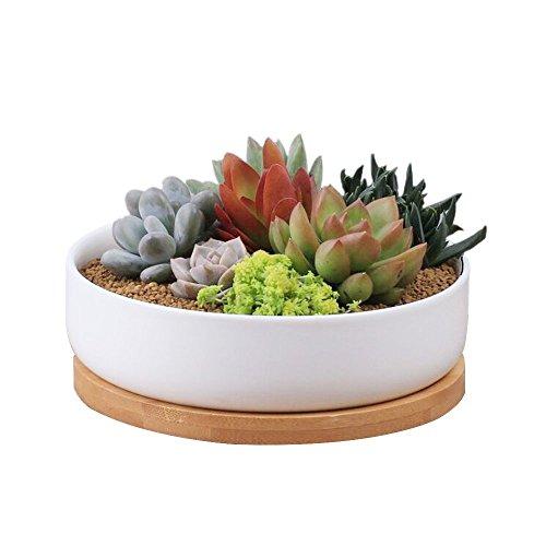 Y&M™ Pflanzschale für Sukkulenten und Kakteen weiße Keramik modern und dekorativ 152 cm rund