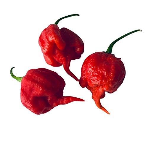 20 Samen CAROLINA REAPER Chili -WELT REKORD CHILLI- mit Spitzenwerten von über 2000000 Scoville