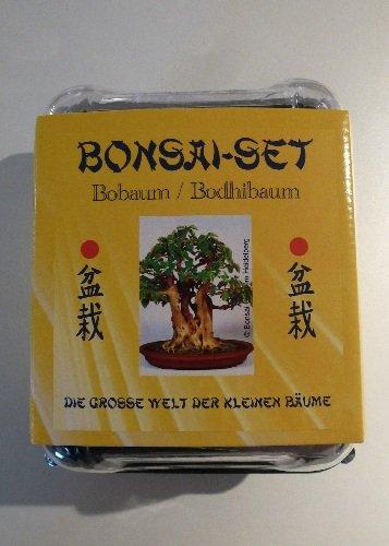 Tropica - Bonsai-Set - Bobaum mit Samen Keramikschale Broschüre und Gewächshaus