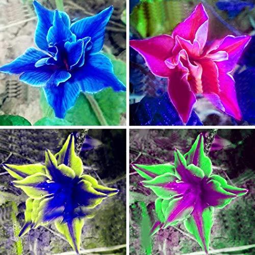 Yukio Samenhaus - Selten 50 Stück Ballonblume Saatgut Lisianthus Eustoma Gastgeschenke Blumensamen Bonsai winterhart mehrjährig für Garten und Balkon