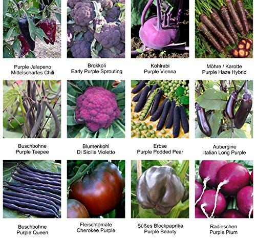 Samen - Saatgutsortiment - Set - Mix - Mischung - lilafarbiges Gemüse - Erbsen Bohnen Brokkoli Blumenkohl und Vieles mehr - 12 Sorten - 555 Samen