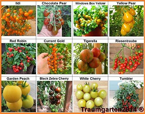 Traumgarten2014 Tomaten Set 3 Balkontomate Cherrytomate Cockteiltomate 12 Sorten je 10 Samen hohe Toleranz gegen Braunfäule Saatgut