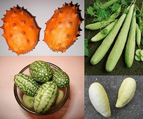 Super Gurken-Samen Mix Top Ertrag  Riesige  Kleine und Seltene Gurkensorten