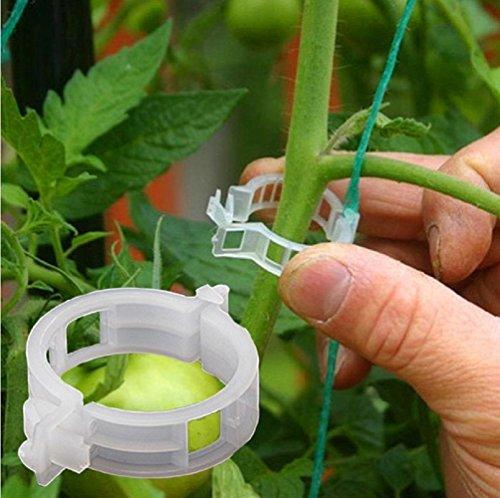 Energystation 50 Stk Pflanzenclips Pflanzenklammern Tomatenclips Verbinden Pfeffer Gurke Reben Ideal für Pflanzen Sicherung Unterstützt Einzupflanzen Kunststoff