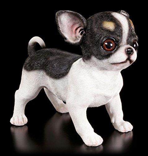 Gartenfigur Hund - Chihuahua Welpe  Deko Garten Figur Skulptur